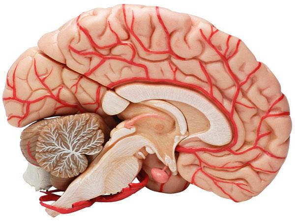 links-cerebro
